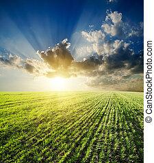 pôr do sol, sobre, agrícola, campo verde