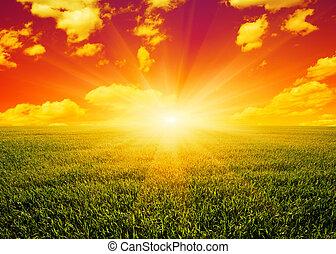 pôr do sol, sobre, campo