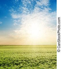 pôr do sol, sobre, campo verde