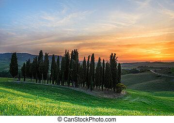 pôr do sol, sobre, cipreste, árvores, em, tuscany