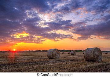 pôr do sol, sobre, cultive campo, com, fardos feno