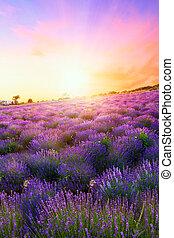 pôr do sol, sobre, um, verão, cor campo alfazema, em, tihany