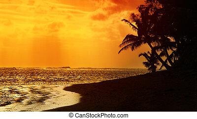pôr do sol, tropicais