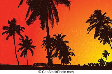 pôr do sol, vista, com, plam, árvore