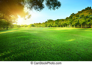 público, sol de la mañana, gr, hermoso, brillar, verde ...