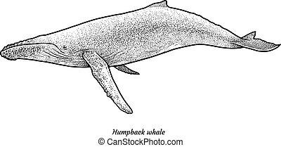 púpos ember bálnavadászat, ábra, rajz, metszés, tinta,...