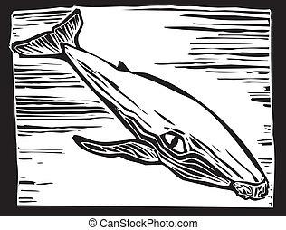 púpos ember bálnavadászat