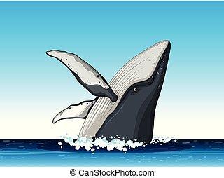 púpos ember bálnavadászat, ugrás, ki, közül, víz