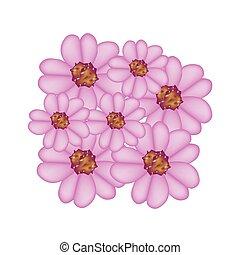 púrpura, achillea, milenrama, millefolium, flores, o