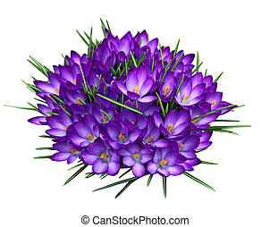 púrpura, azafrán