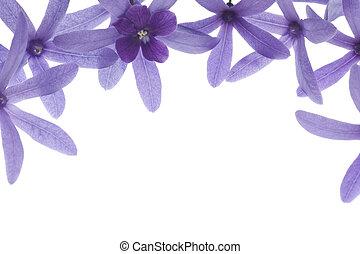 púrpura, blanco, flores, plano de fondo