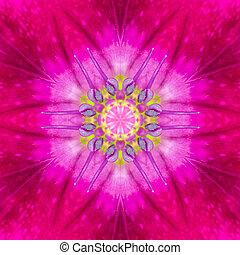 púrpura, concéntrico, flor, center., mandala, diseño
