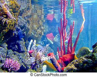 púrpura, coral