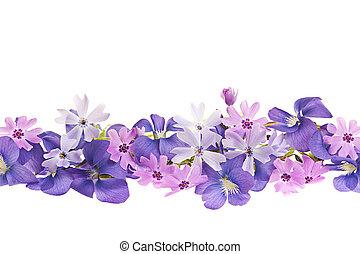 púrpura, flor de primavera, frontera
