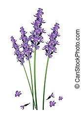 púrpura, flores blancas, lavanda, plano de fondo