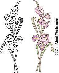 púrpura, iris