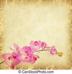 púrpura, papel, Plano de fondo, orquídea