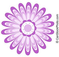 púrpura, patrón, flor