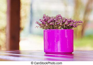 púrpura, -, rosa, maceta, con, flor violeta, en, tabla