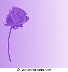 púrpura, rosa, solo