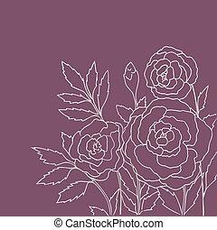 púrpura, rosas, aislado, hermoso