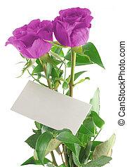 púrpura, rosas, con, bl