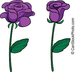púrpura, rosas, dos
