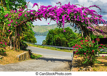 púrpura, tailandia, flores, arco