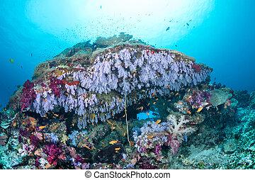 púrpura, tropical, barrera coralina, colorido