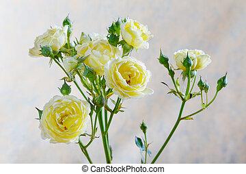pączek, róża, tło, beżowy, żółty
