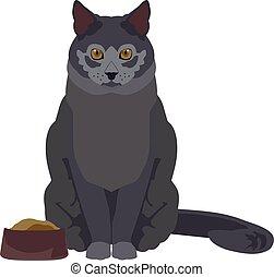 płaski, ilustracja, kot