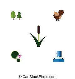 płaski, ożypałka, ekologia, komplet, elements., kaskada, lotos, lotos, zawiera, trawa, również, wektor, trzcina, objects., inny, ikona