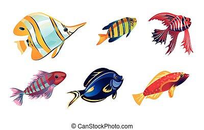 płaski, wektor, barwny, ilustracja, komplet, styl, rafa, rysunek, koral, różny, fish.