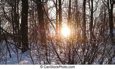 płatki śniegu, powoli, upadek, na, zachód słońca, w, przedimek określony przed rzeczownikami, las, wśród, krzaki, i, drzewa, niejaki, fantastyczny, las, zachód słońca, powolny ruch