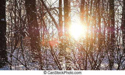 płatki śniegu, powoli, upadek, na, zachód słońca, w, przedimek określony przed rzeczownikami, las, wśród, krzaki, i, drzewa, powolny ruch