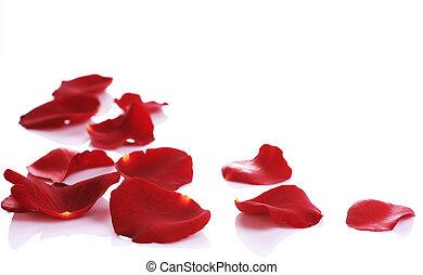 płatki, brzeg, róża