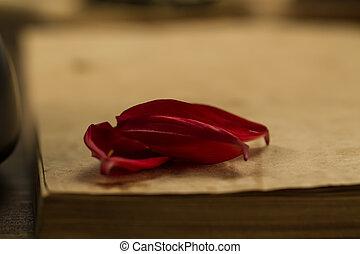 płatki, kwiat, stary, do góry, drewniany, menu, tło., książka, recepta, czysty, otwarty, kpić