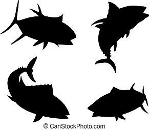płetwa, tuńczyk, sylwetka, fish, żółty