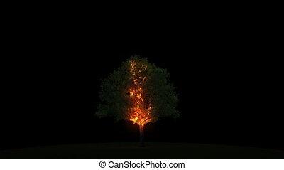 płonie, drzewo, piorun