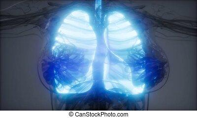 płuca, egzamin, ludzki, rentgenologia