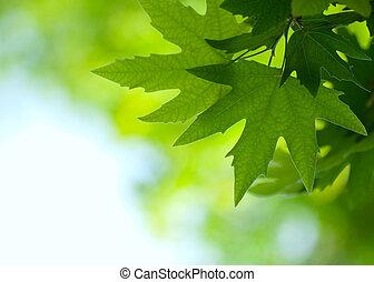 płytki, zielony, ognisko, liście