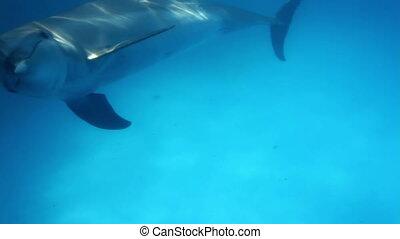pływacki, strzał, dookoła, delfiny