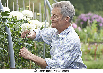 představený voják, šlechtit, květiny, do, zahrada