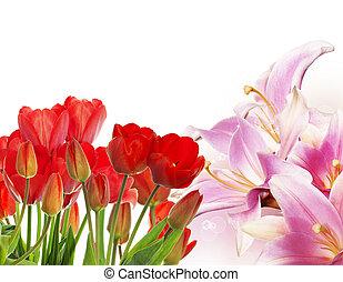 překrásný, čerstvý, červeň, tulipán, dále, abstraktní, pramen, druh, grafické pozadí