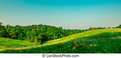 překrásný, hlína, krajina, konzervativní, concept., nebe, day., bojiště, pozadu, les, neposkvrněný, komponování, druh, štěstí, grafické pozadí, květiny, čistý, ráno, oběžnice, nezkušený, hill., selský, pastvina