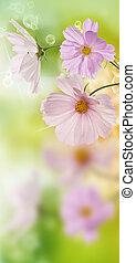 překrásný, květiny, dále, abstraktní, pramen, druh, grafické pozadí