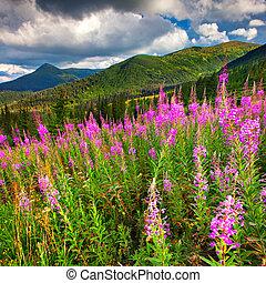 překrásný, léto, krajina, od hora, s, vrchol květovat