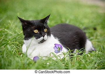 překrásný, lies, pastvina, kočka