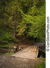 překrásný, můstek, dávný, dřevěný, hynout ukrýt v lese