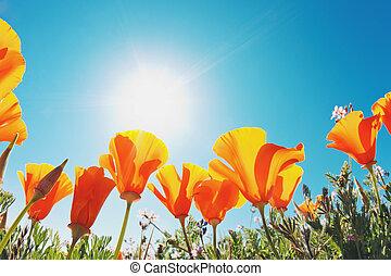 překrásný, původ přivést do květu